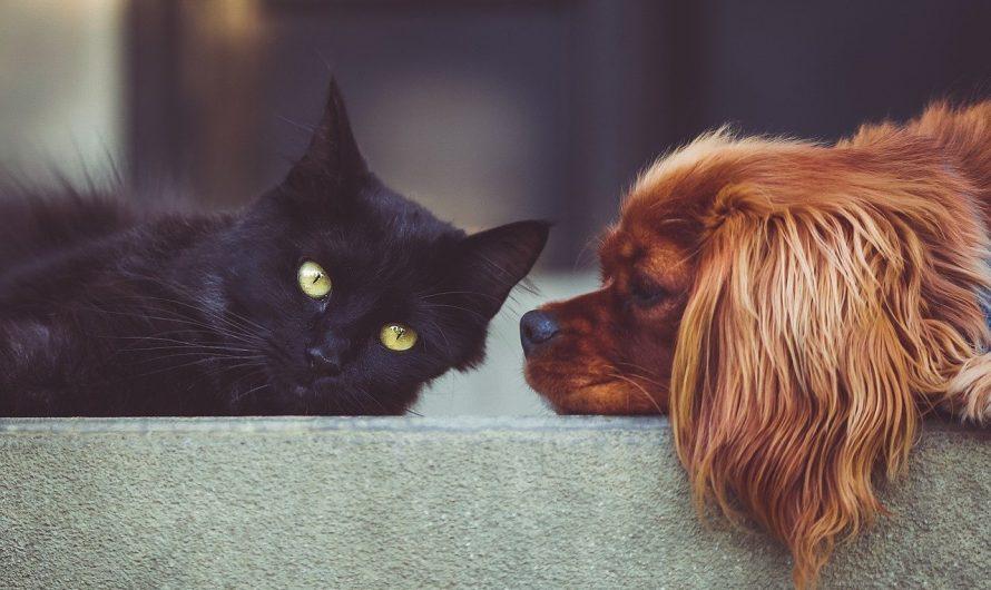 Nos conseils pour accueillir un chien ou un chat dans un petit appartement